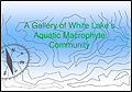 2015 Macrophyte Report